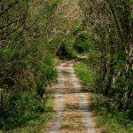 Hutan Wanagama